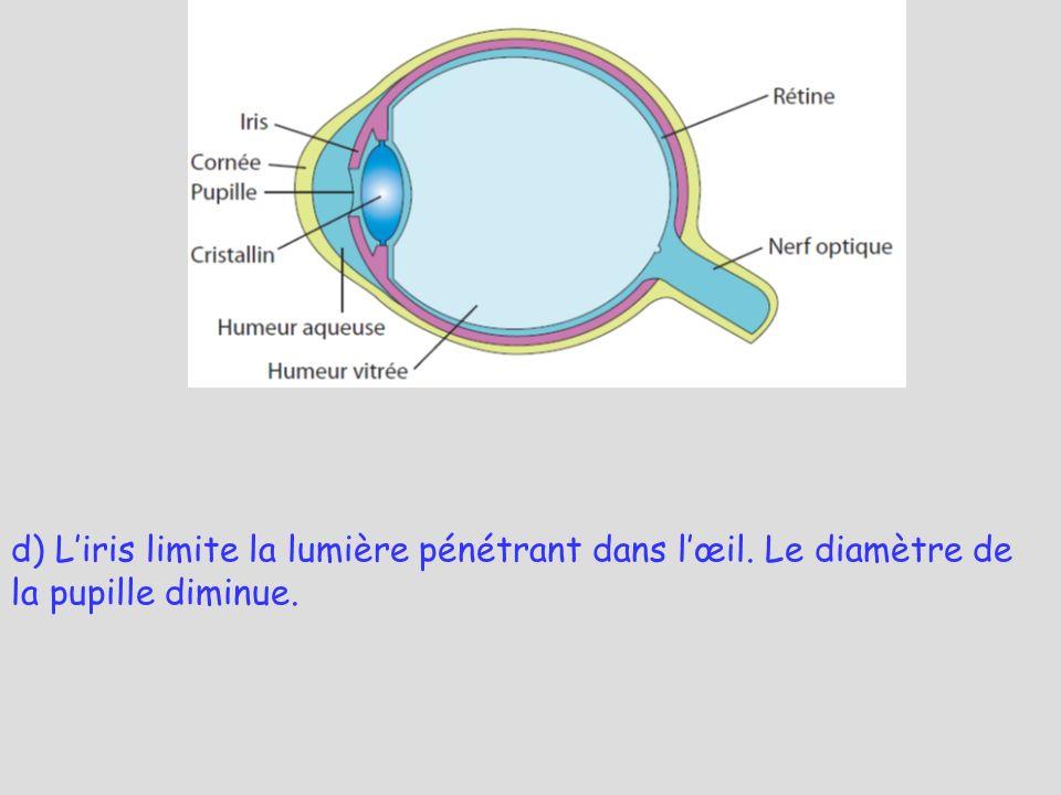 d) L'iris limite la lumière pénétrant dans l'œil