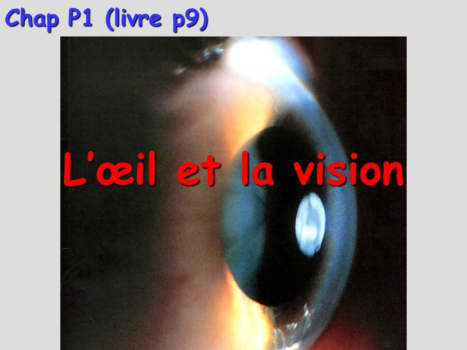 Chap P1 (livre p9) L'œil et la vision