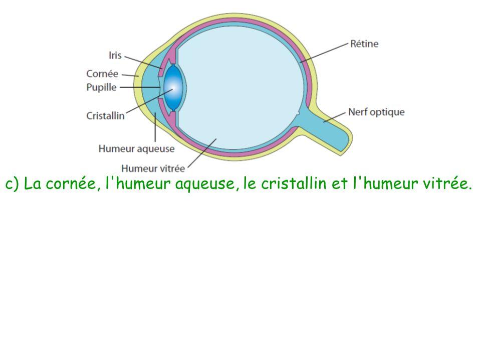 c) La cornée, l humeur aqueuse, le cristallin et l humeur vitrée.