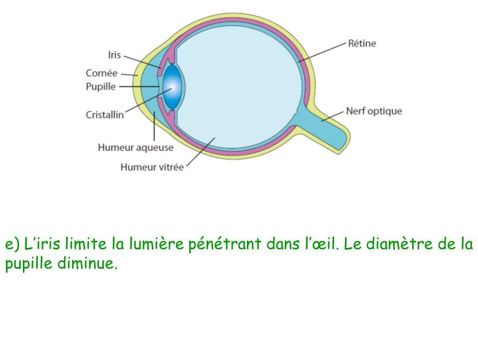 e) L'iris limite la lumière pénétrant dans l'œil