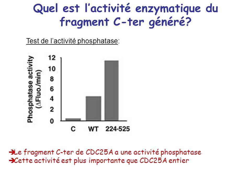Quel est l'activité enzymatique du fragment C-ter généré