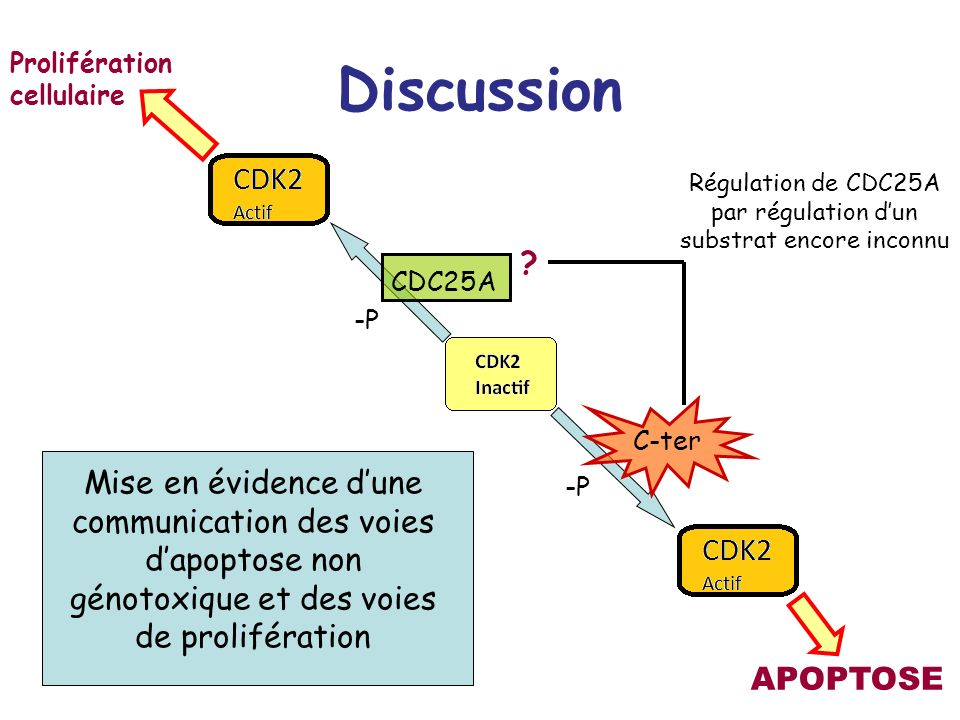 Régulation de CDC25A par régulation d'un substrat encore inconnu