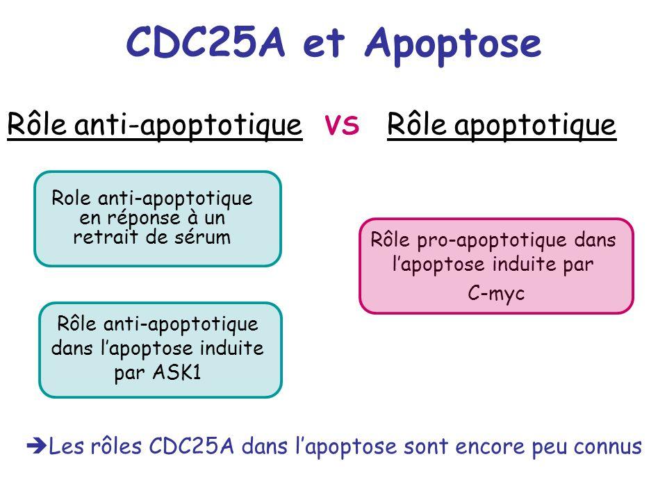 CDC25A et Apoptose Rôle anti-apoptotique VS Rôle apoptotique