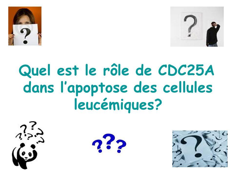 Quel est le rôle de CDC25A dans l'apoptose des cellules leucémiques
