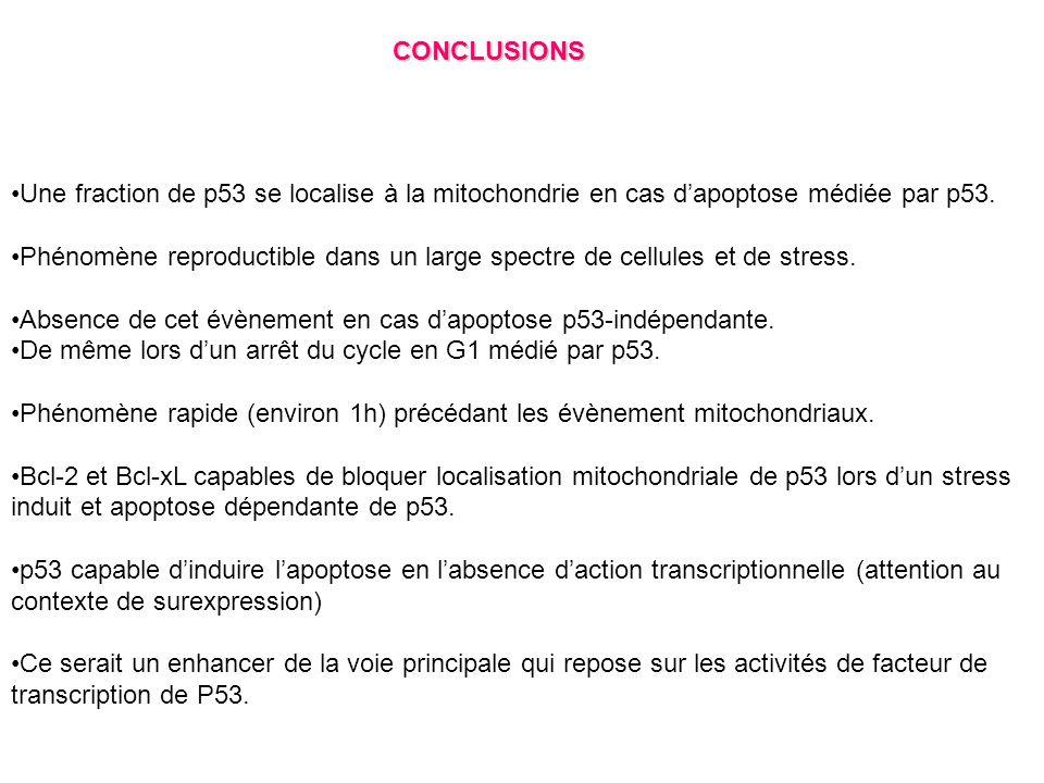 CONCLUSIONS Une fraction de p53 se localise à la mitochondrie en cas d'apoptose médiée par p53.