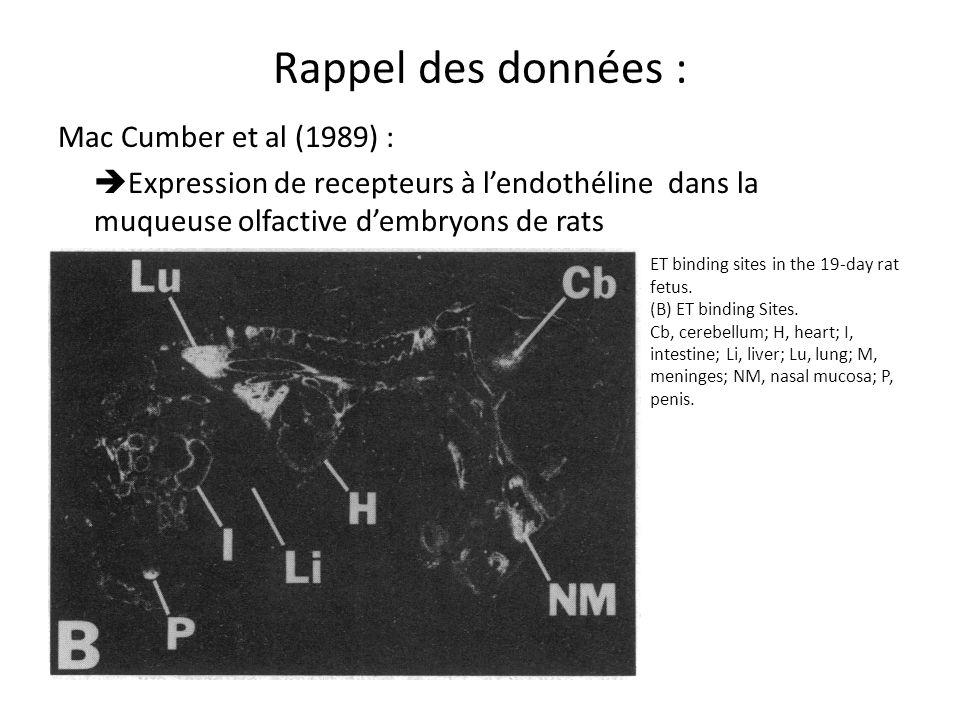 Rappel des données : Mac Cumber et al (1989) : Expression de recepteurs à l'endothéline dans la muqueuse olfactive d'embryons de rats