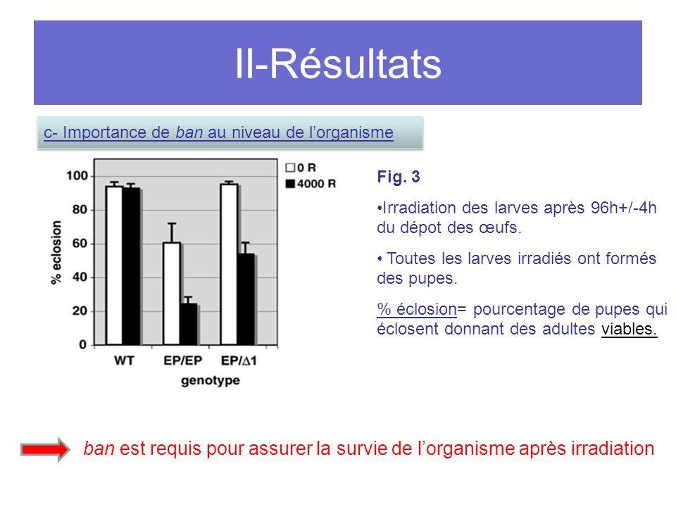 II-Résultats c- Importance de ban au niveau de l'organisme. Fig. 3. Irradiation des larves après 96h+/-4h du dépot des œufs.