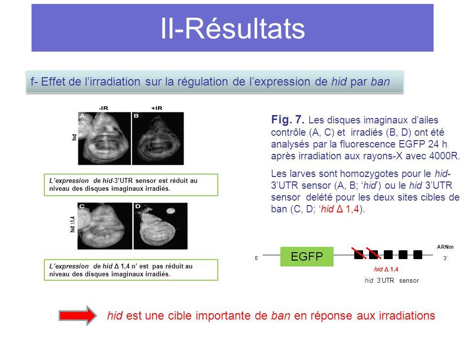 hid est une cible importante de ban en réponse aux irradiations