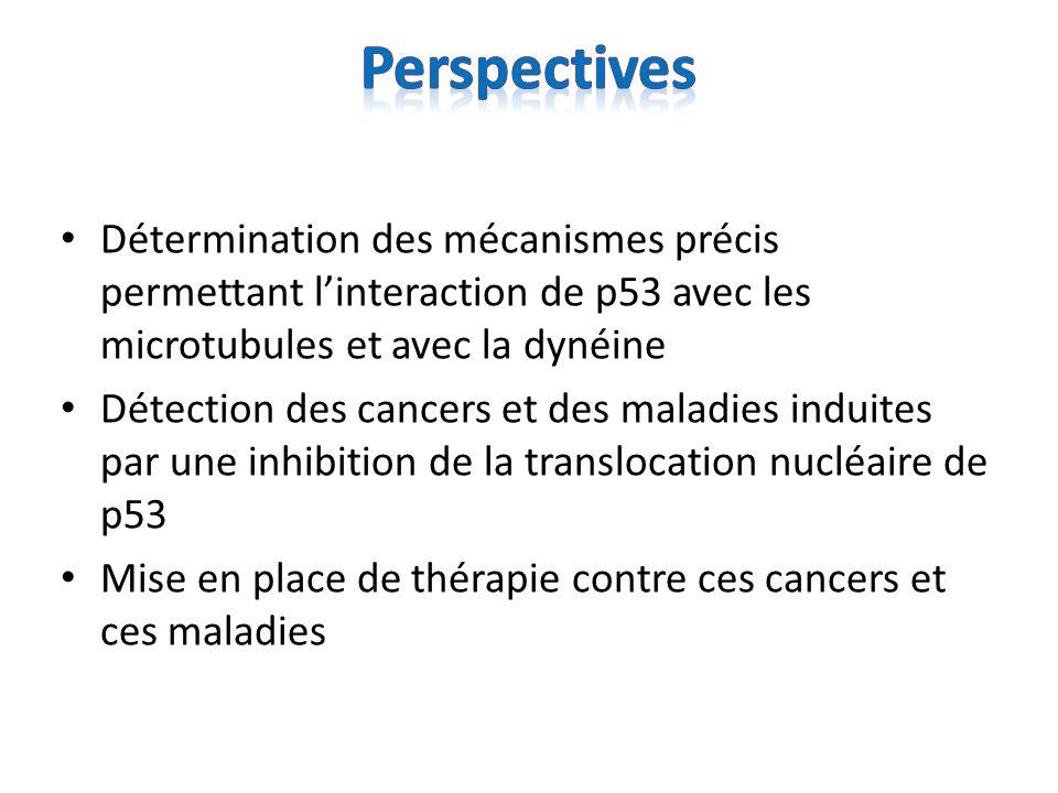 Perspectives Détermination des mécanismes précis permettant l'interaction de p53 avec les microtubules et avec la dynéine.