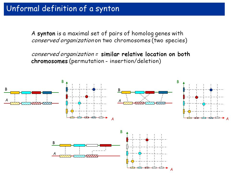 Unformal definition of a synton