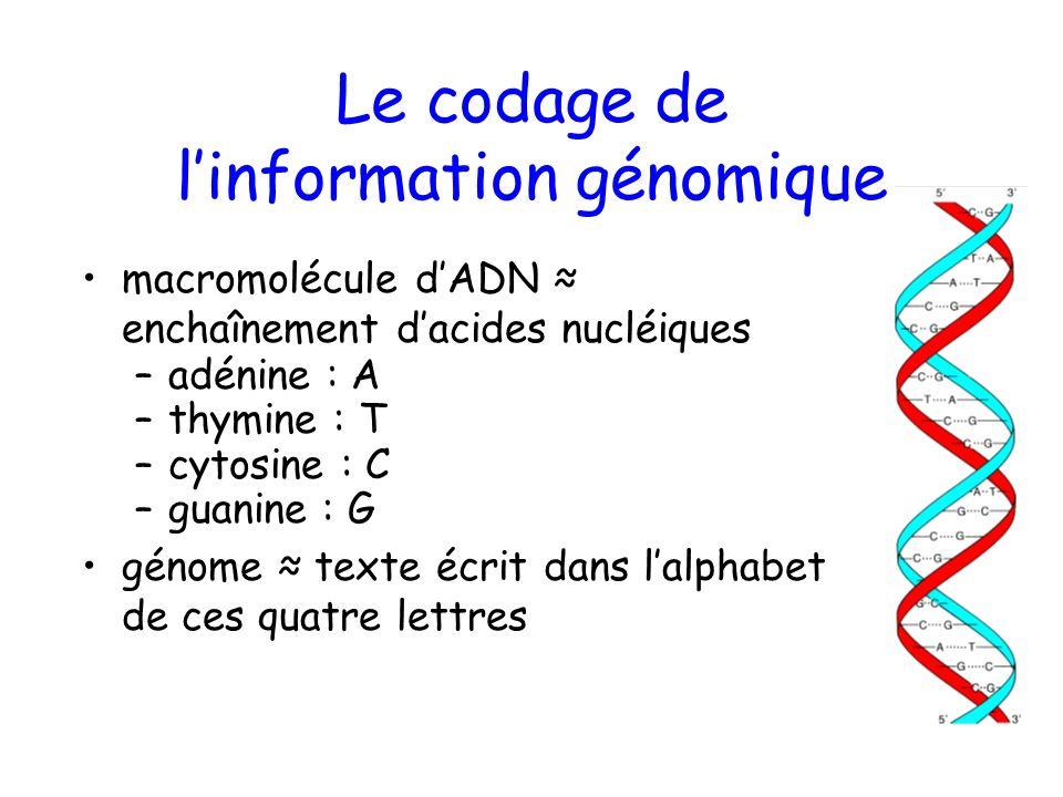 Le codage de l'information génomique