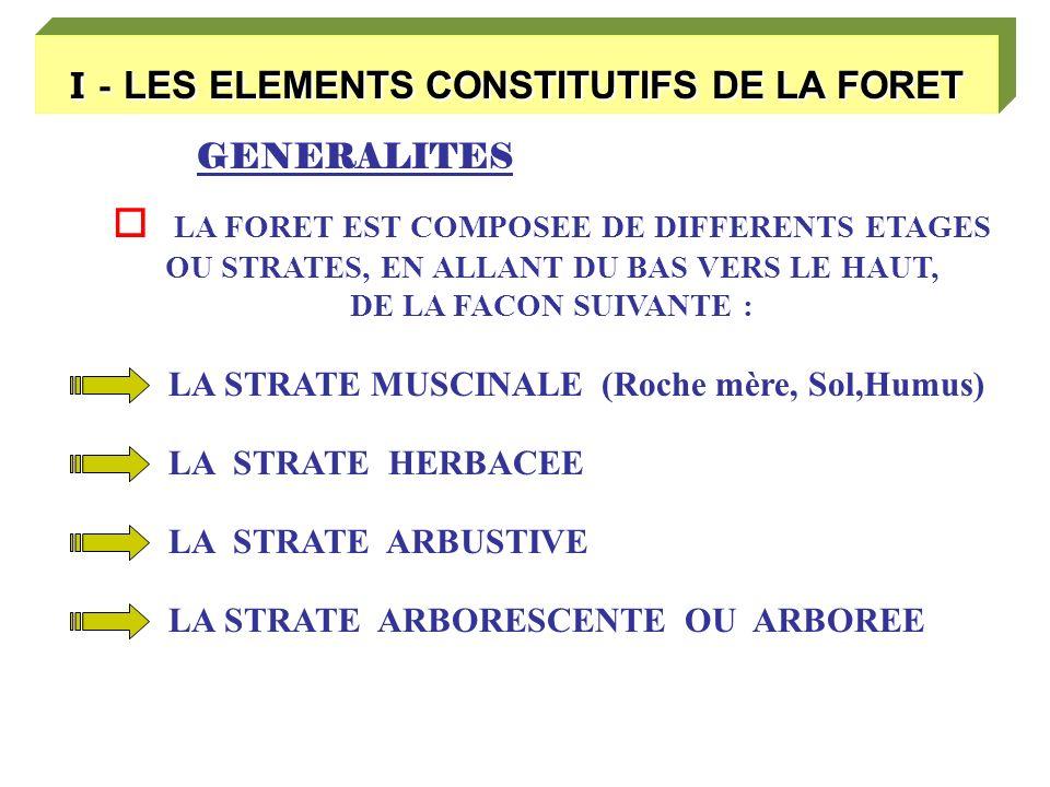 I - LES ELEMENTS CONSTITUTIFS DE LA FORET