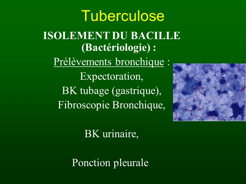 Tuberculose ISOLEMENT DU BACILLE (Bactériologie) :