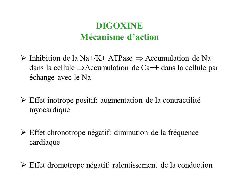 DIGOXINE Mécanisme d'action