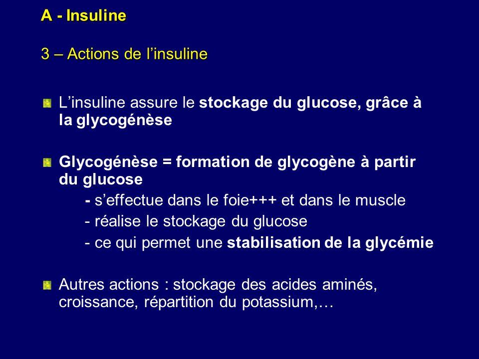 A - Insuline 3 – Actions de l'insuline