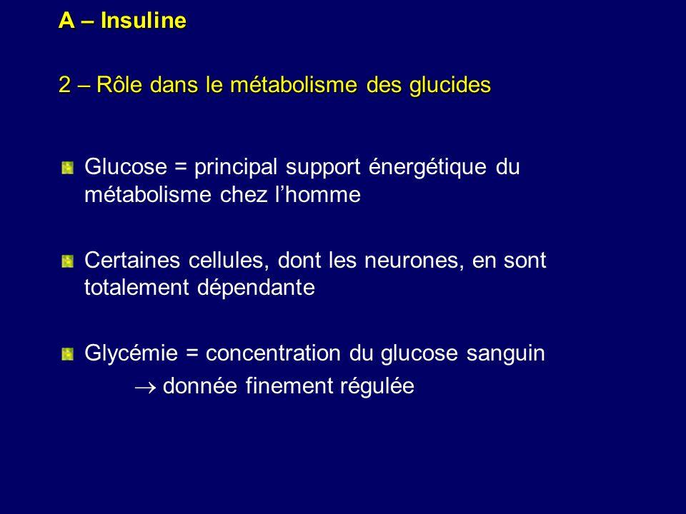 A – Insuline 2 – Rôle dans le métabolisme des glucides