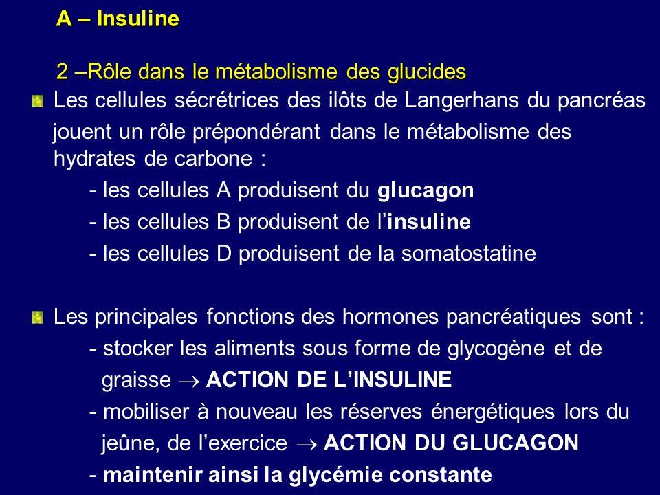 A – Insuline 2 –Rôle dans le métabolisme des glucides