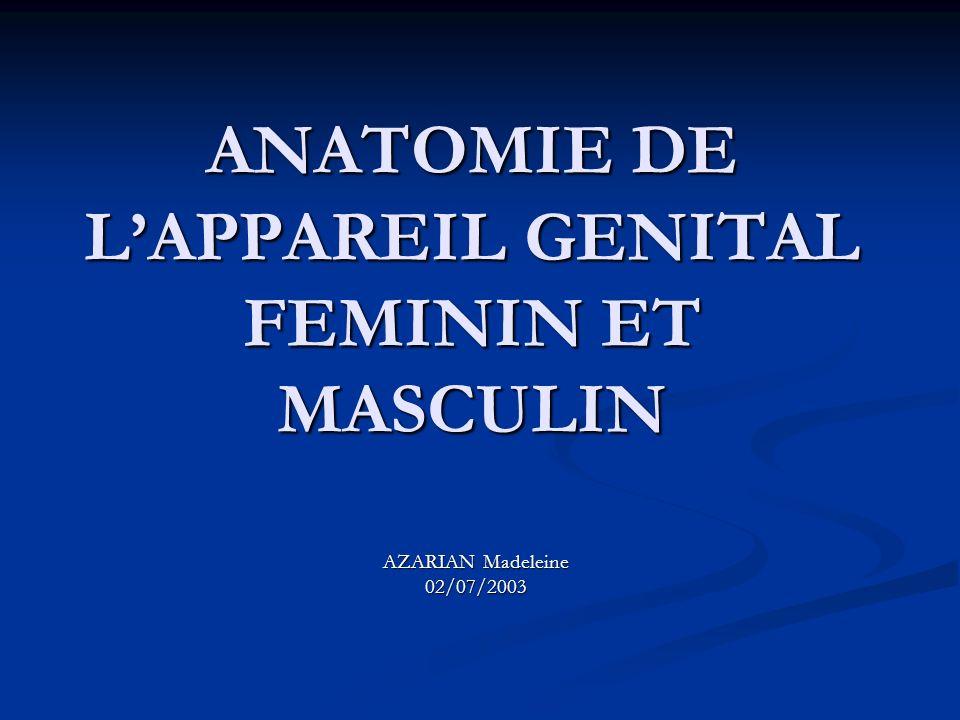 ANATOMIE DE L'APPAREIL GENITAL FEMININ ET MASCULIN