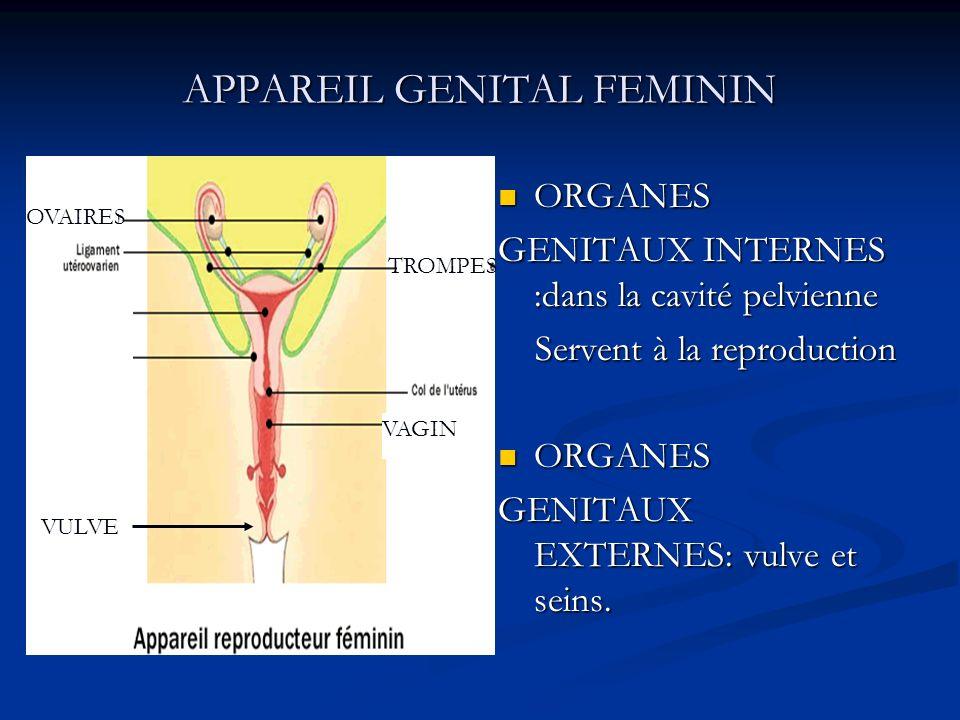 APPAREIL GENITAL FEMININ