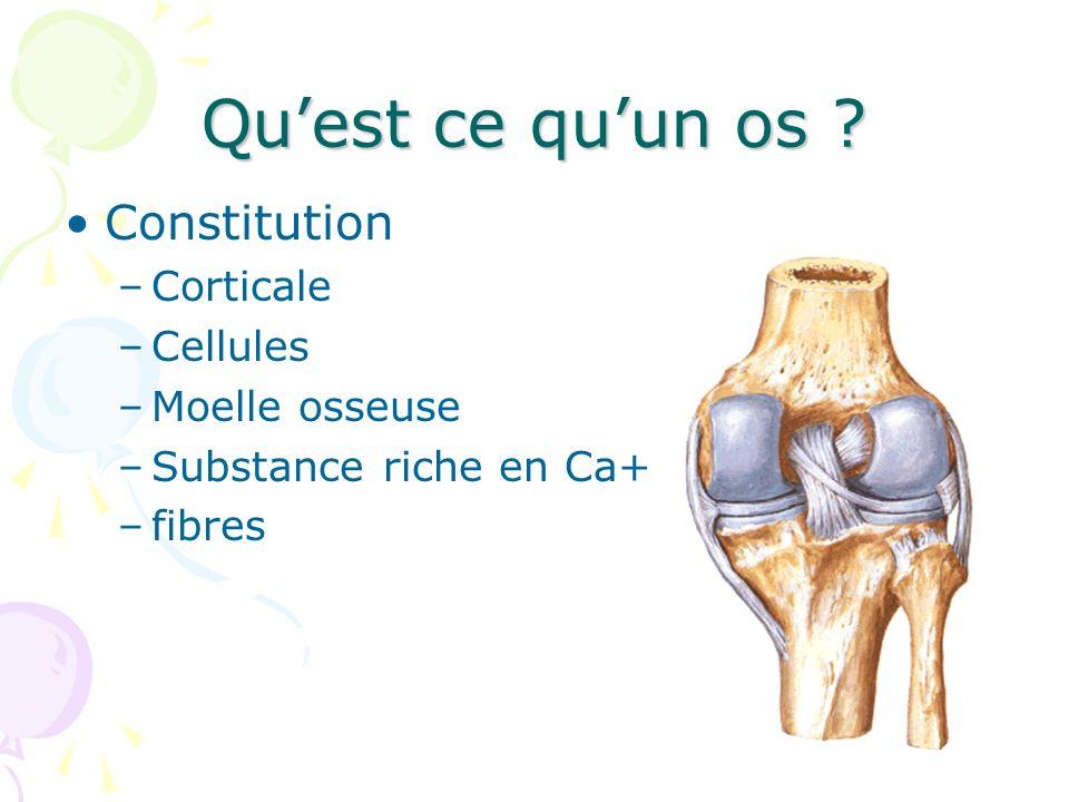 Qu'est ce qu'un os Constitution Corticale Cellules Moelle osseuse