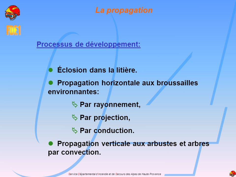La propagation Processus de développement:  Éclosion dans la litière.