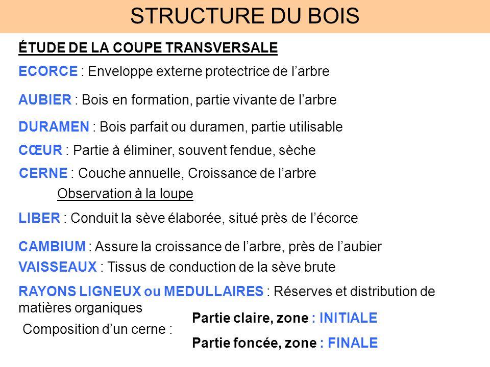 STRUCTURE DU BOIS ÉTUDE DE LA COUPE TRANSVERSALE