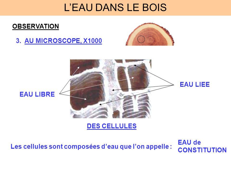 L'EAU DANS LE BOIS OBSERVATION AU MICROSCOPE, X1000 EAU LIEE EAU LIBRE