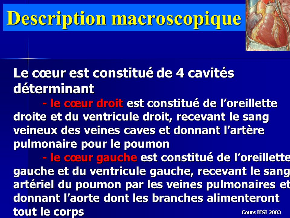 Description macroscopique