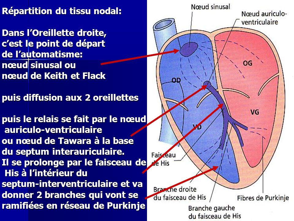 Répartition du tissu nodal: