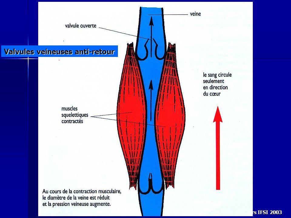Valvules veineuses anti-retour
