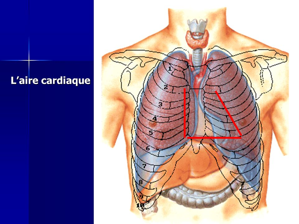 L'aire cardiaque Cours IFSI 2003