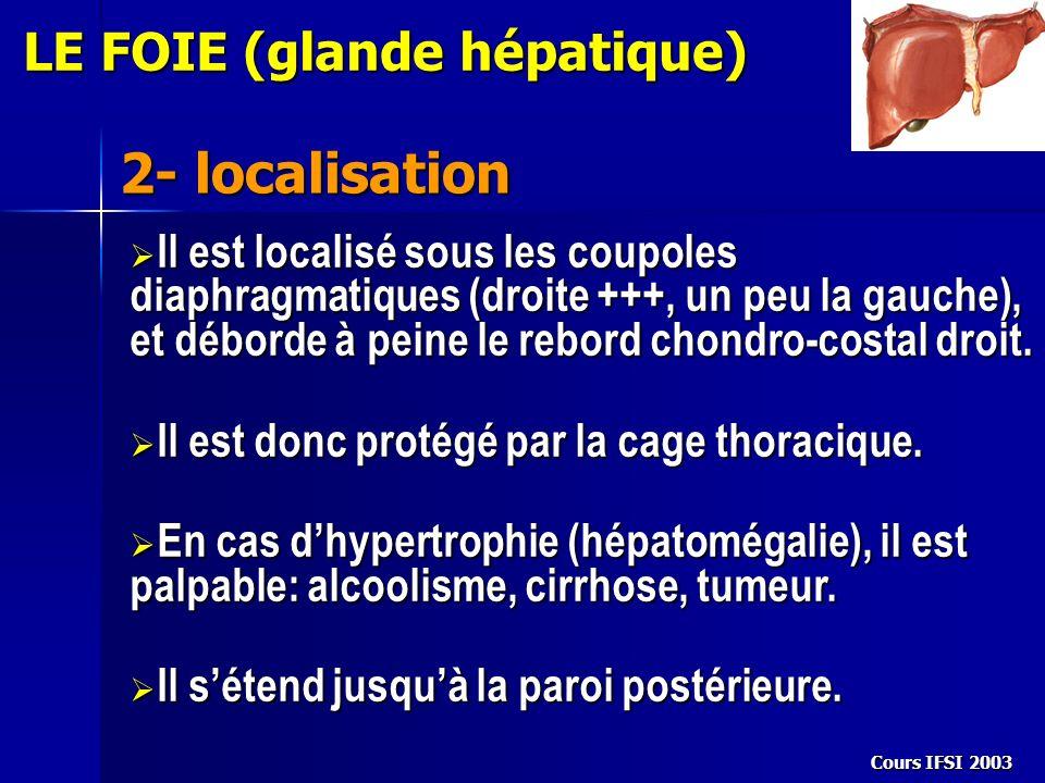 2- localisation LE FOIE (glande hépatique)