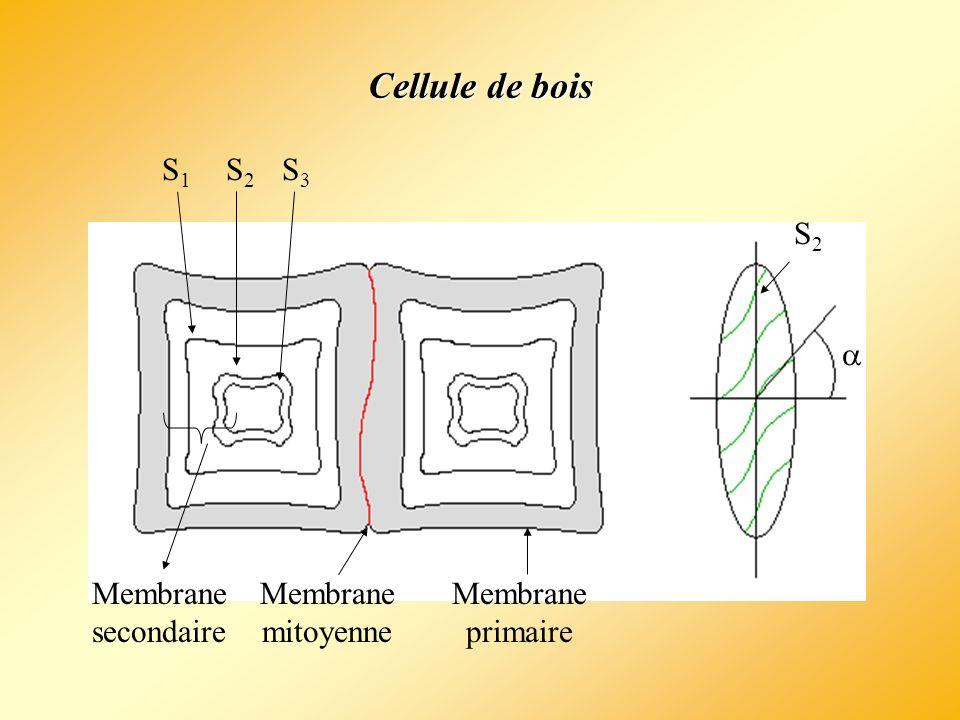 Cellule de bois S1 S2 S3 a Membrane secondaire Membrane mitoyenne