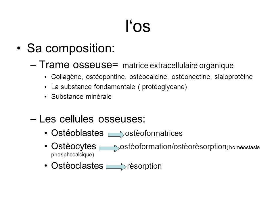 l'os Sa composition: Trame osseuse= matrice extracellulaire organique