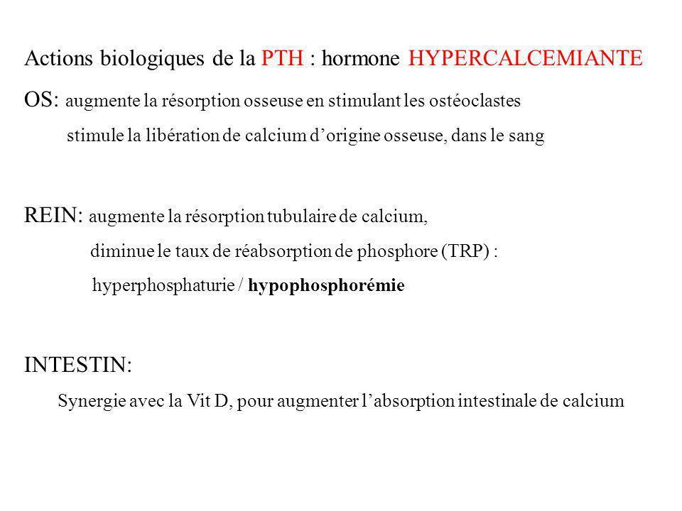 Actions biologiques de la PTH : hormone HYPERCALCEMIANTE