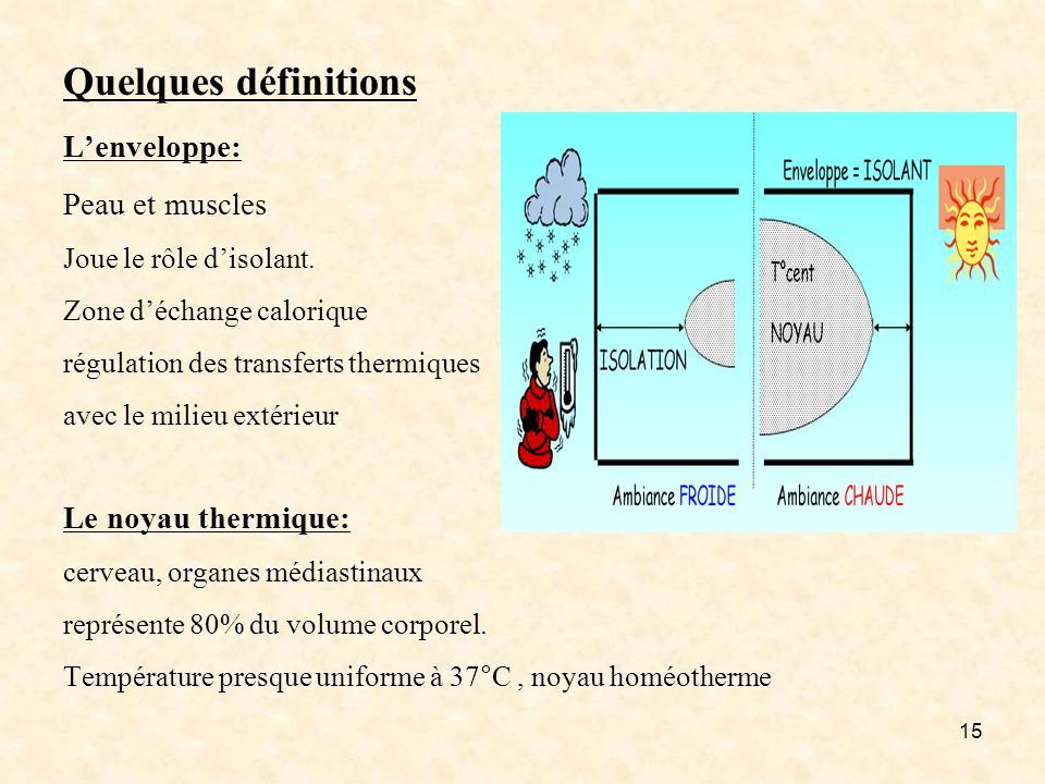Quelques définitions L'enveloppe: Peau et muscles Joue le rôle d'isolant.