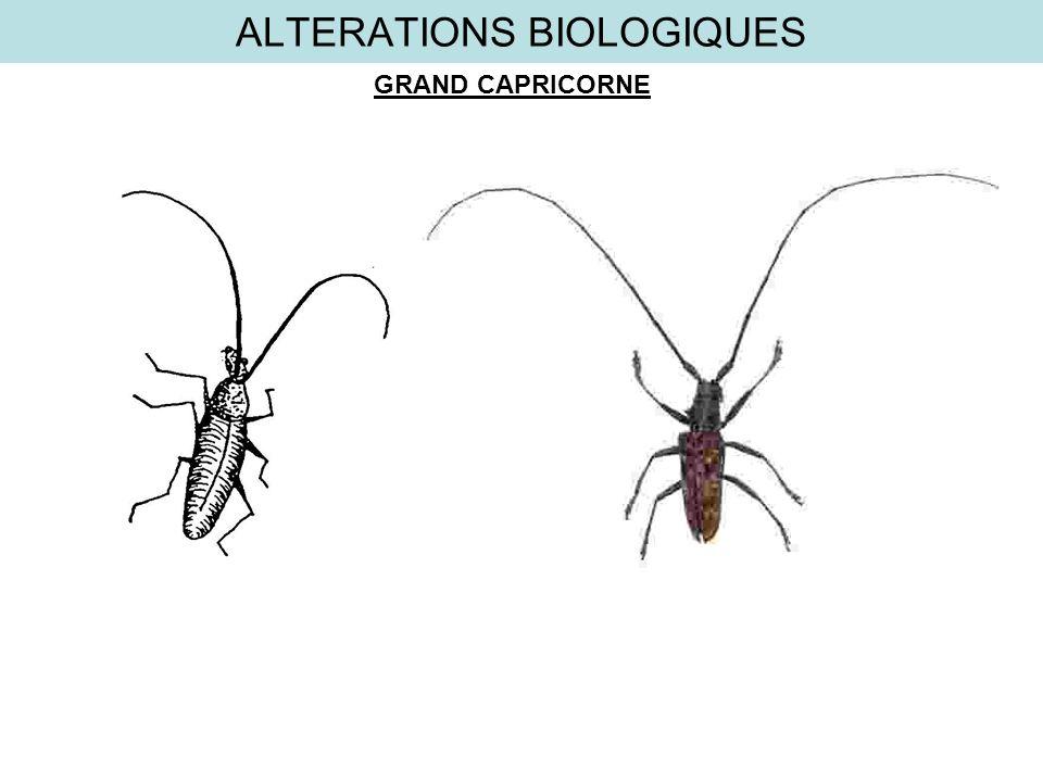 ALTERATIONS BIOLOGIQUES