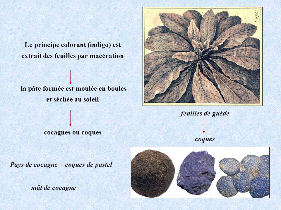 Le principe colorant (indigo) est extrait des feuilles par macération