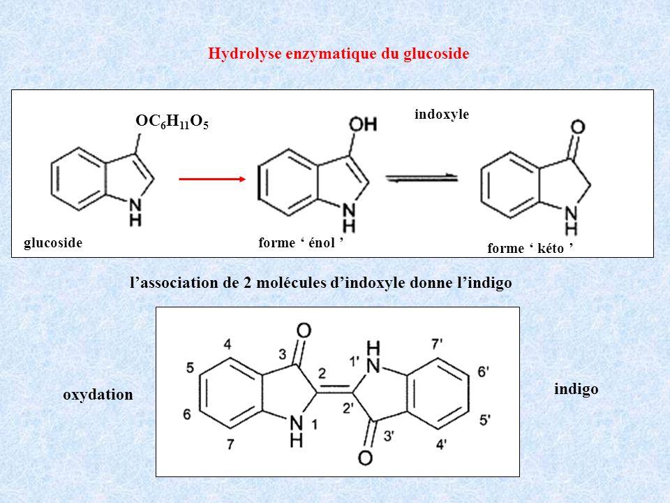 Hydrolyse enzymatique du glucoside