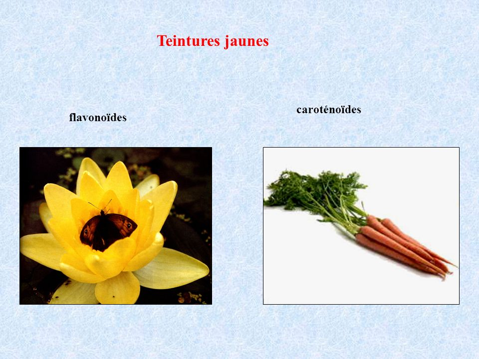 Teintures jaunes caroténoïdes flavonoïdes