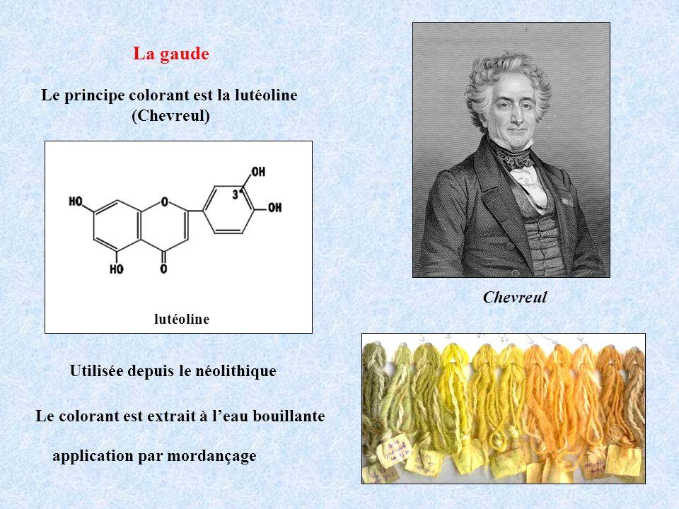 Le principe colorant est la lutéoline