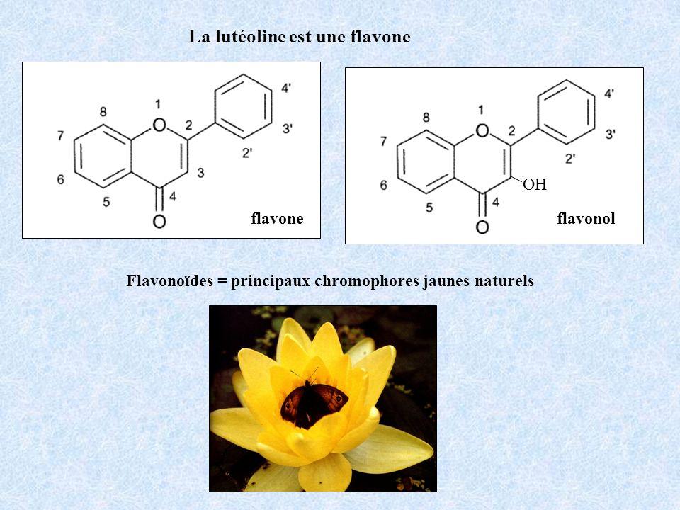 La lutéoline est une flavone