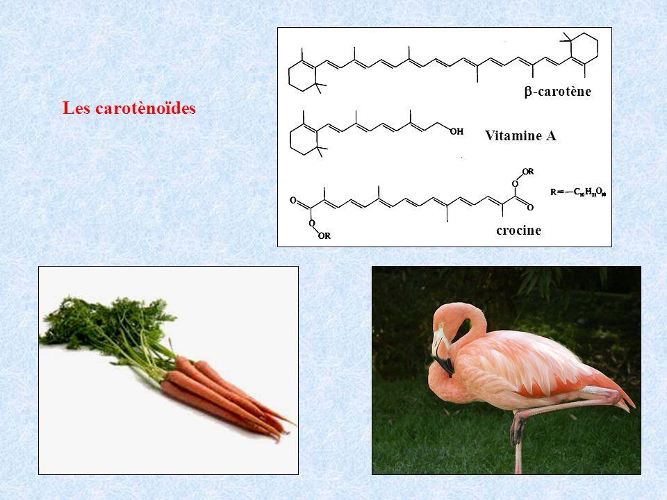 Vitamine A b-carotène crocine Les carotènoïdes