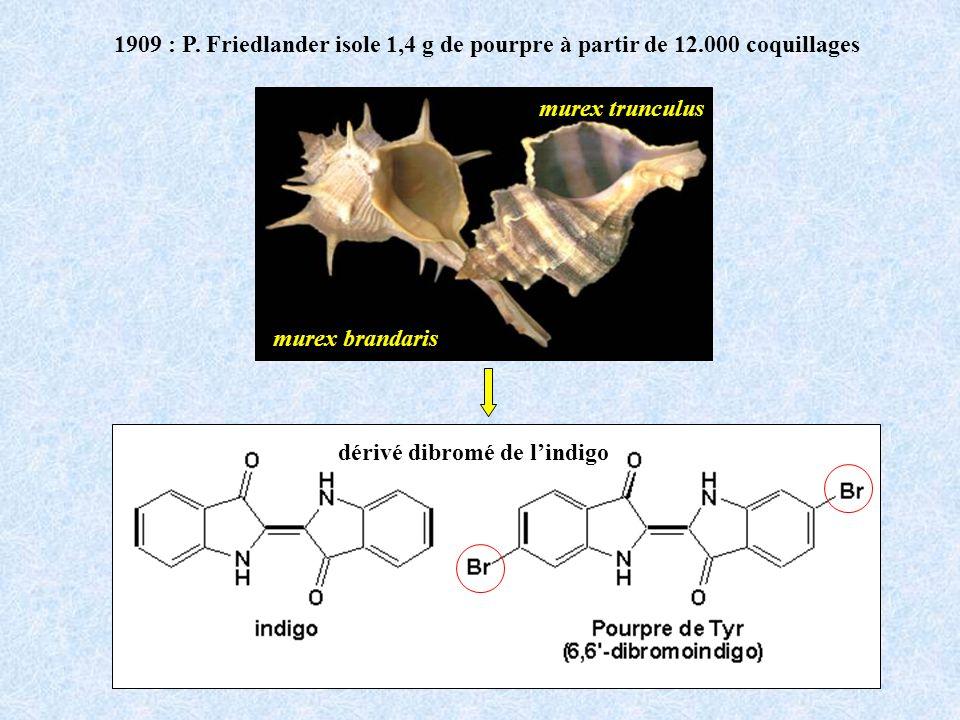 1909 : P. Friedlander isole 1,4 g de pourpre à partir de 12