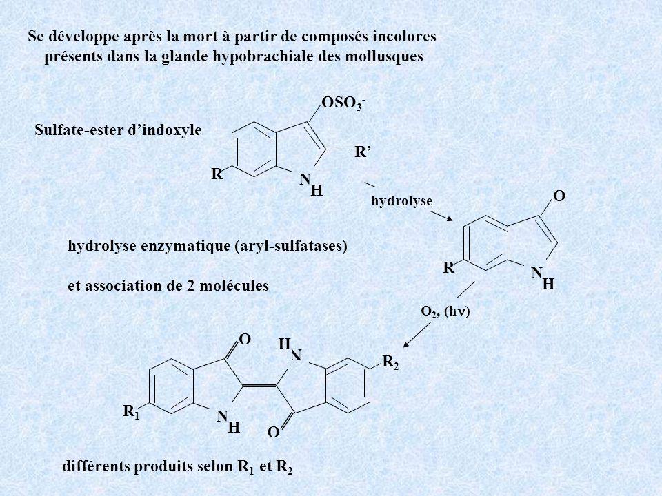 Se développe après la mort à partir de composés incolores