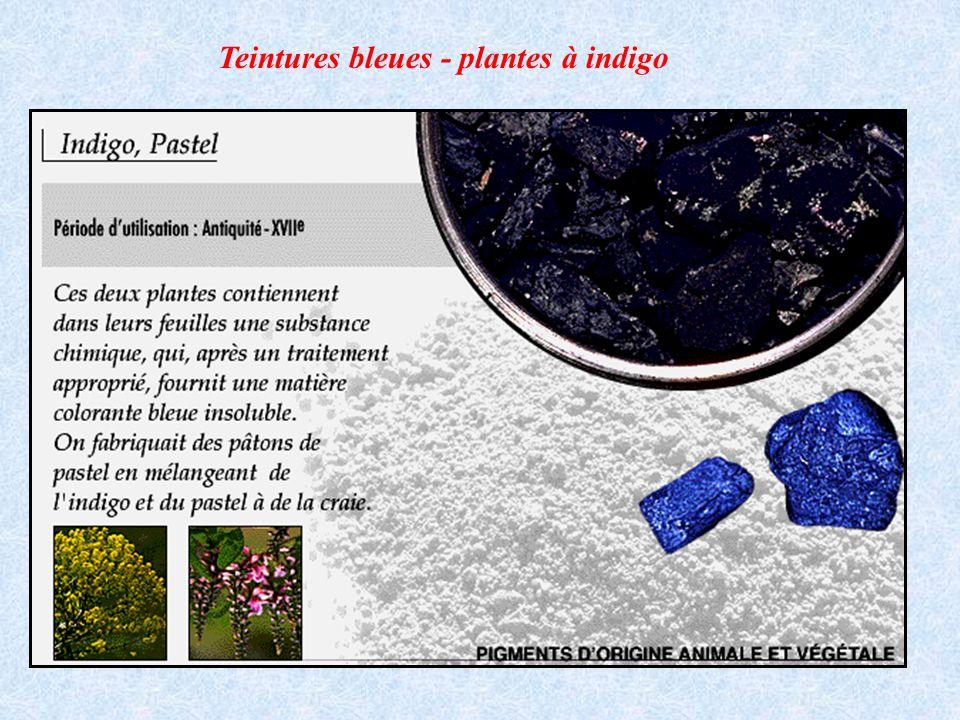 Teintures bleues - plantes à indigo