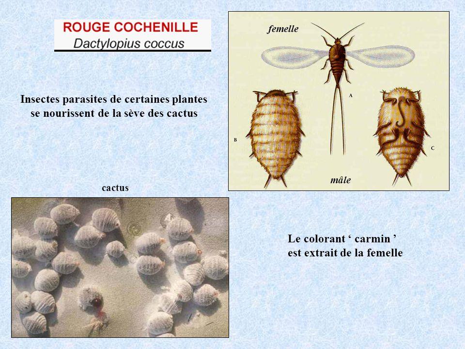 Insectes parasites de certaines plantes