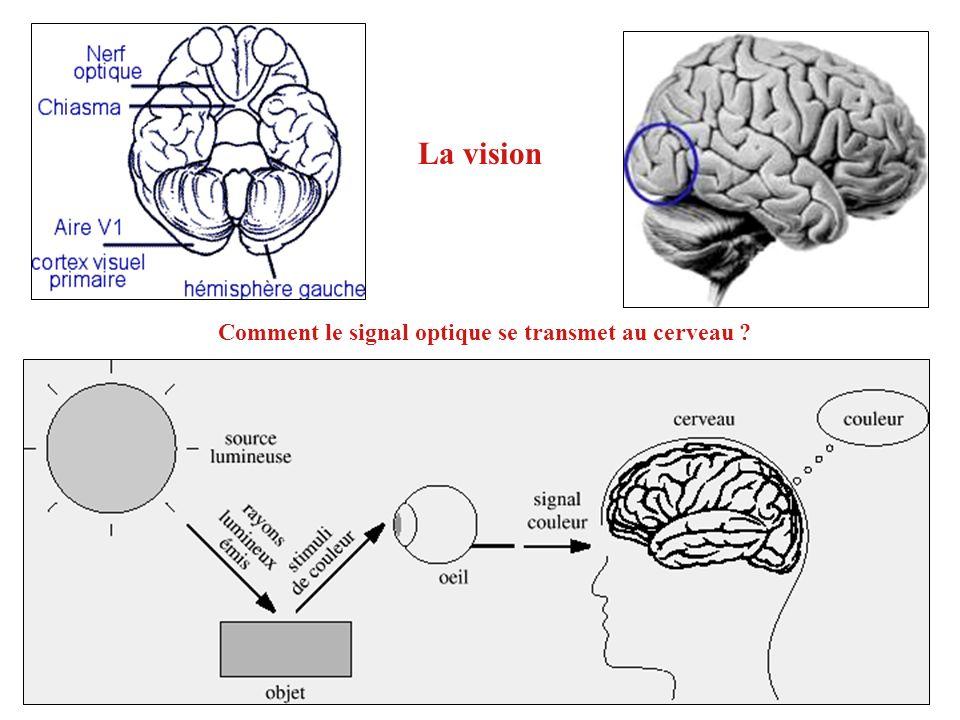 La vision Comment le signal optique se transmet au cerveau
