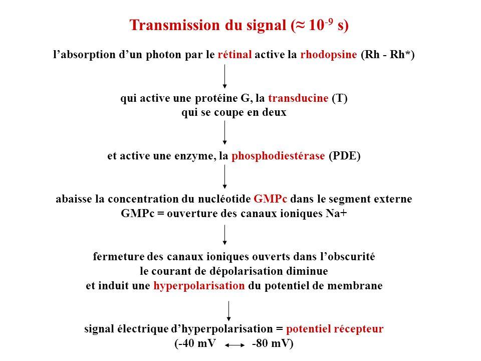 Transmission du signal (≈ 10-9 s)