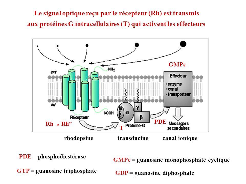 Le signal optique reçu par le récepteur (Rh) est transmis